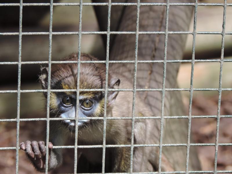 Zoo de Beauval Dscn5922