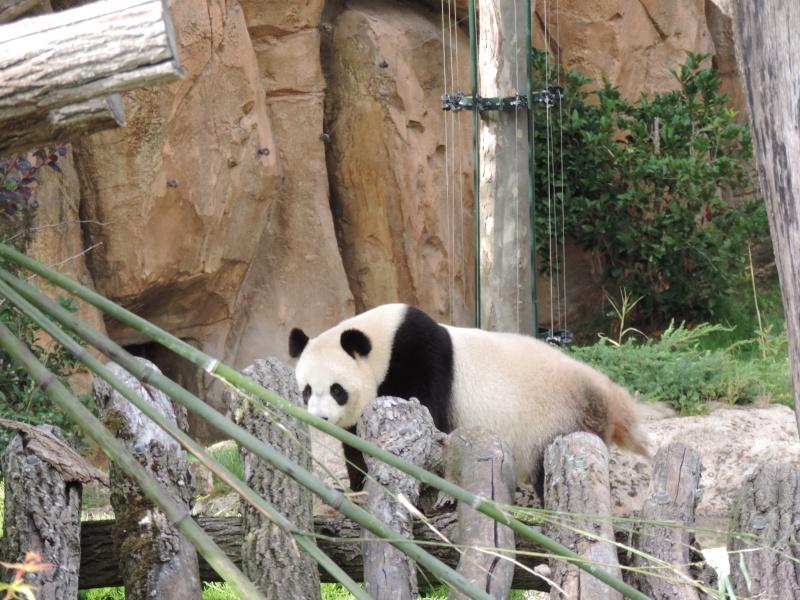 Zoo de Beauval Dscn5923