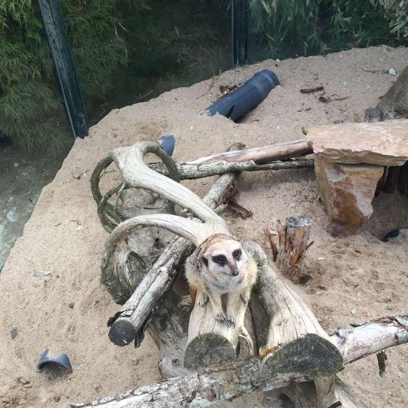 Zoo de Beauval Img_1012