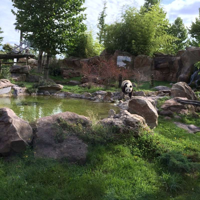 Zoo de Beauval Img_1014