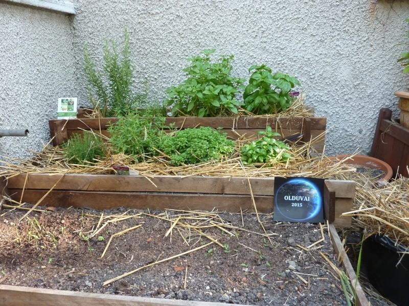 Protection des jeunes plants sous la canicule P1050510