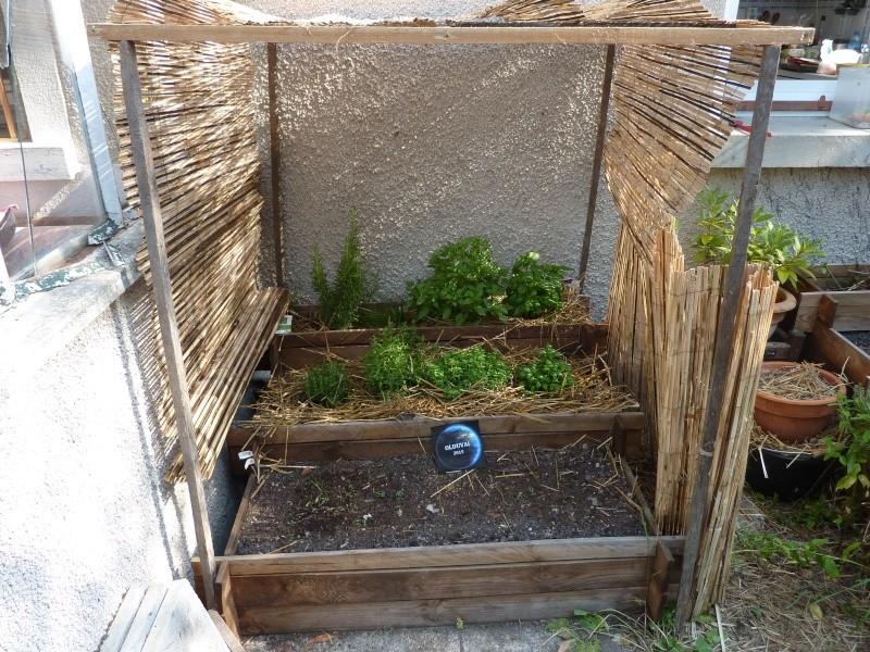 Protection des jeunes plants sous la canicule P1050511