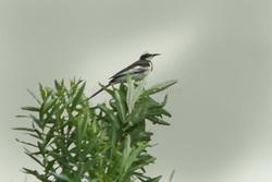 Une nouvelle espèce découverte chaque semaine dans le Grand Mékong 17001010