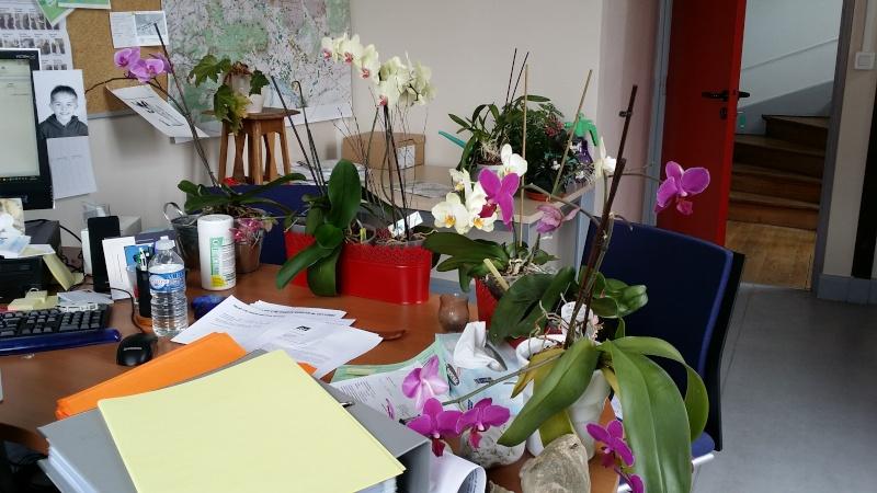 phalaenopsis au bureau - Page 2 20150632