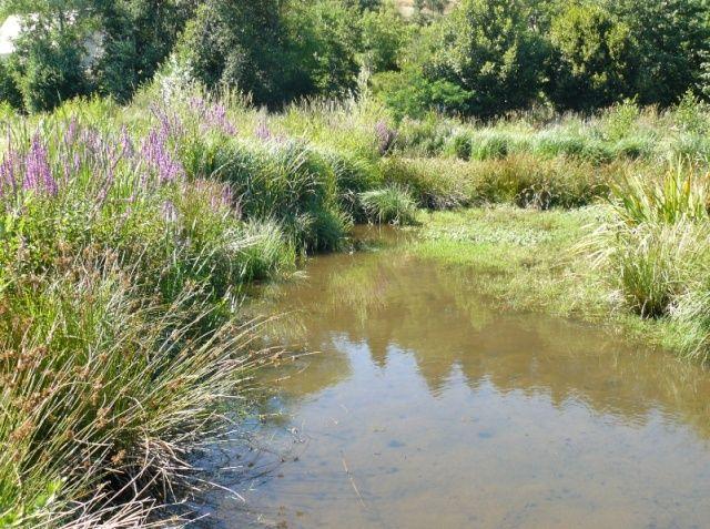 La zone humide du lac d'Aydat (63) Zone310