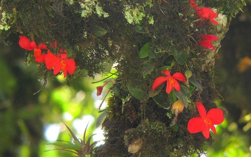 Cattleya et genres alliés  - Page 2 11329710