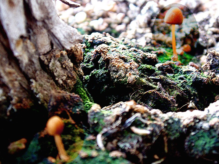 FUNGUS: Joy or Pain? Fungus15