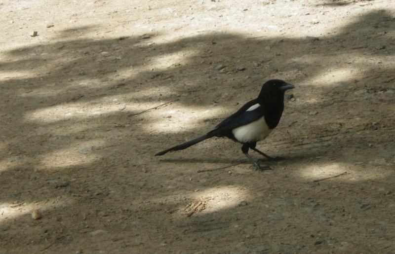 les oiseaux et petites bêtes au cours de nos balades - Page 2 Imgp6710
