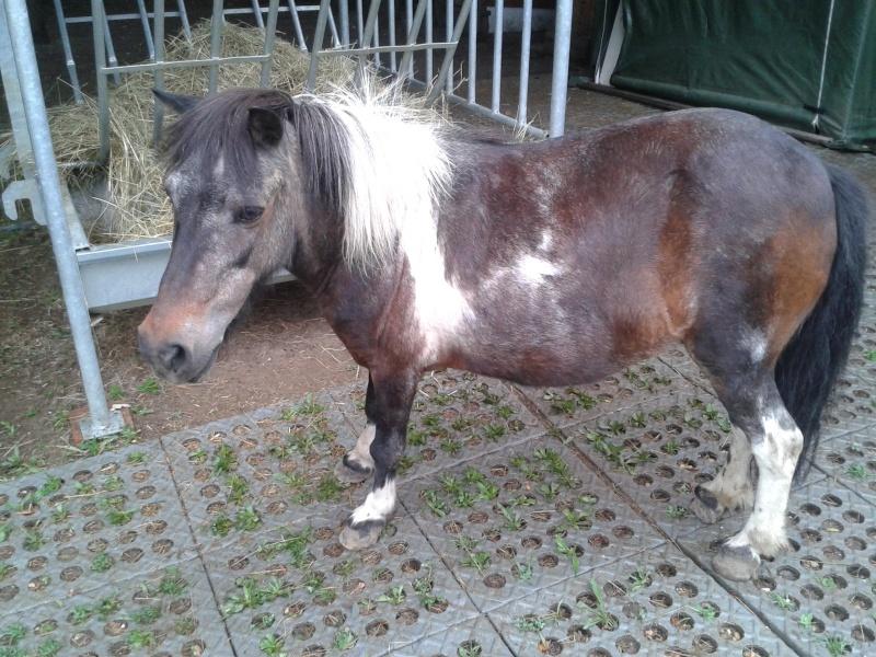 PRUNELLE - ONC poney née en 1986  - adoptée en octobre 2012 par Prosper - Page 4 2015-011