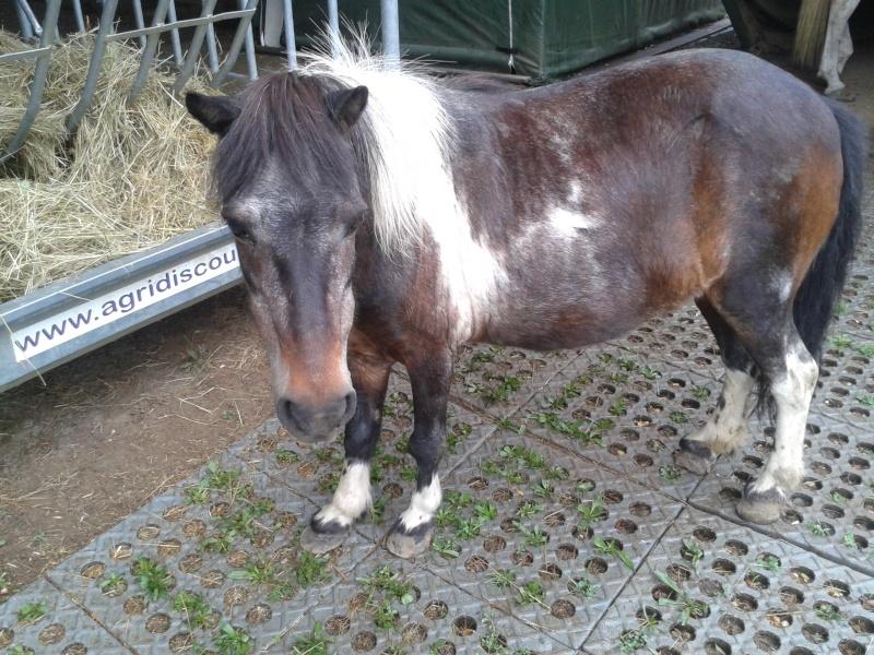 PRUNELLE - ONC poney née en 1986  - adoptée en octobre 2012 par Prosper - Page 4 2015-012