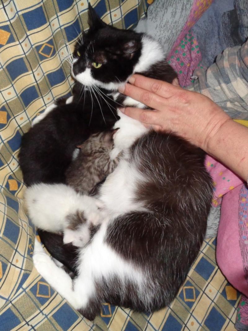 petits chatons en famille d'acceuil. Dsc00510
