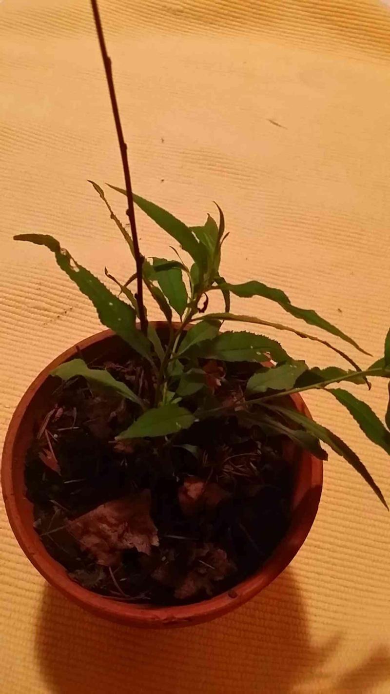 Protéger ses jeunes plants avec des fougères 20150612
