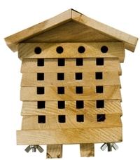 Faites l'abeille pour assurer des fruits chez les courges et les melons Ruche-10
