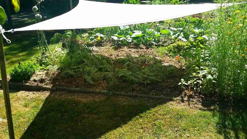 Protéger ses jeunes plants avec des fougères Voile10