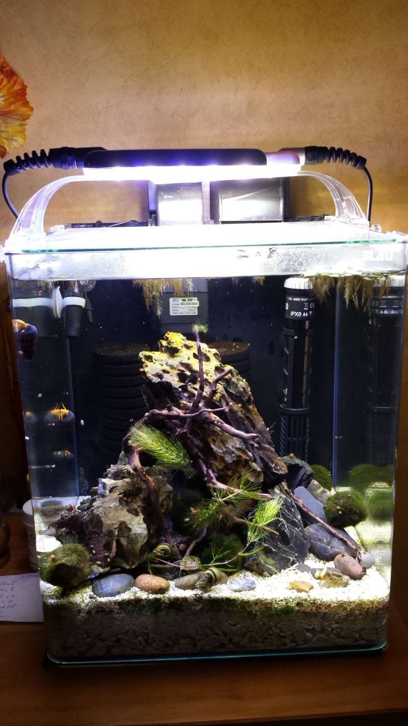 LANCEMENT NANO 30 Litres biotope Sulawesi - Page 2 20150710