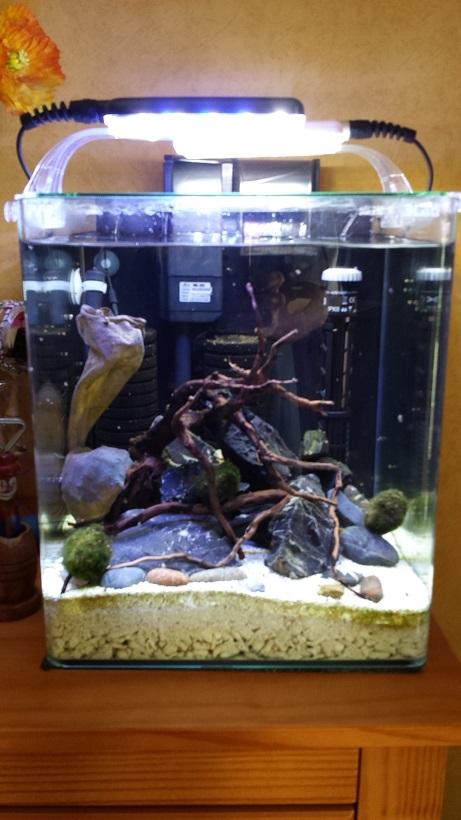 LANCEMENT NANO 30 Litres biotope Sulawesi Aquari12