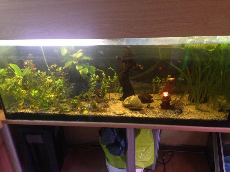 Une ménagerie aquatique Img_2920