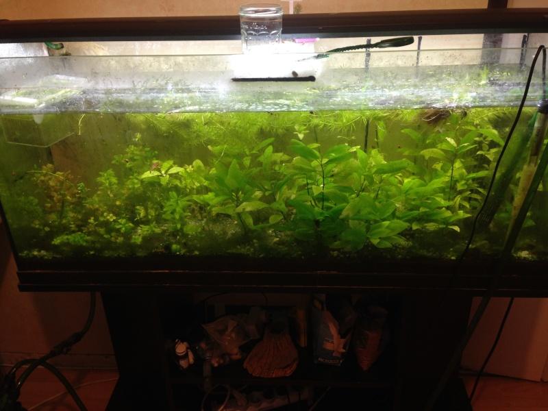 Une ménagerie aquatique Img_3317