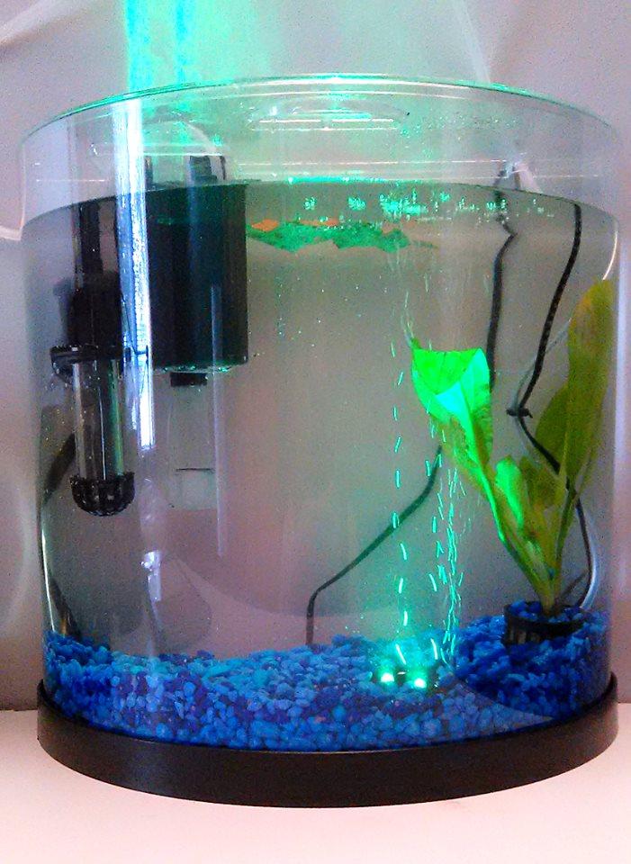 11,5 Litres de Sherlock Aquari10