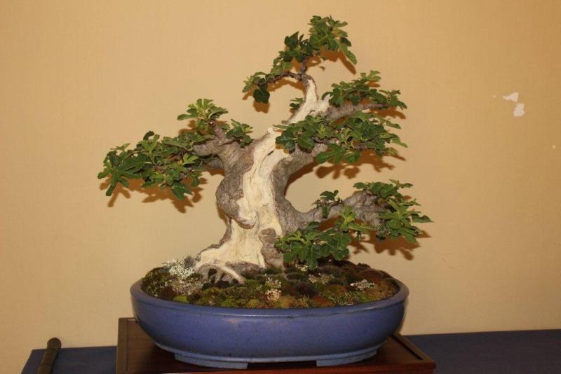 Mostra bonsai e suiseki a Roma. Img_6313