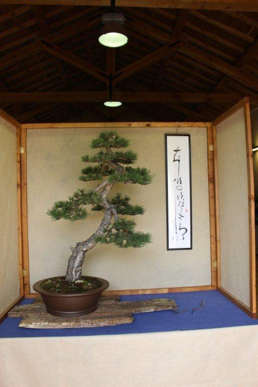 Mostra bonsai e suiseki a Roma. Img_6314