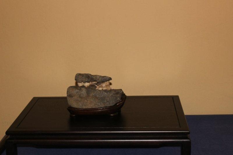 Mostra bonsai e suiseki a Roma. Img_6316