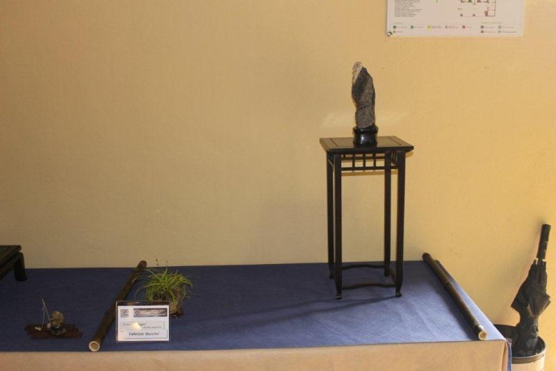 Mostra bonsai e suiseki a Roma. Img_6317