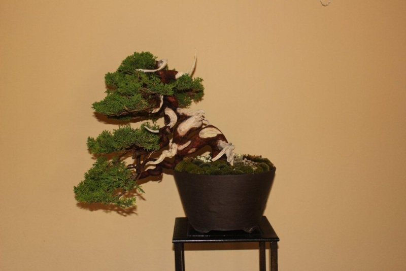 Mostra bonsai e suiseki a Roma. Img_6318