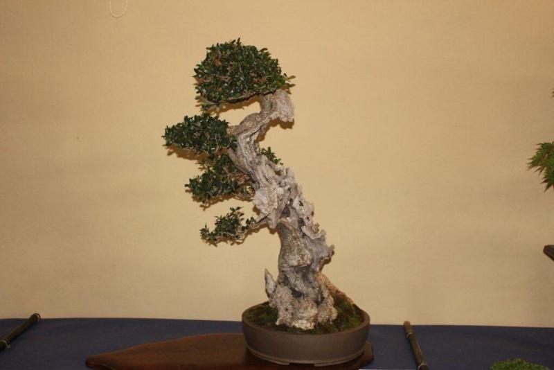 Mostra bonsai e suiseki a Roma. Img_6324
