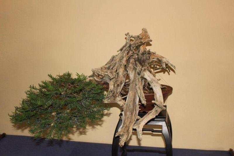 Mostra bonsai e suiseki a Roma. Img_6325