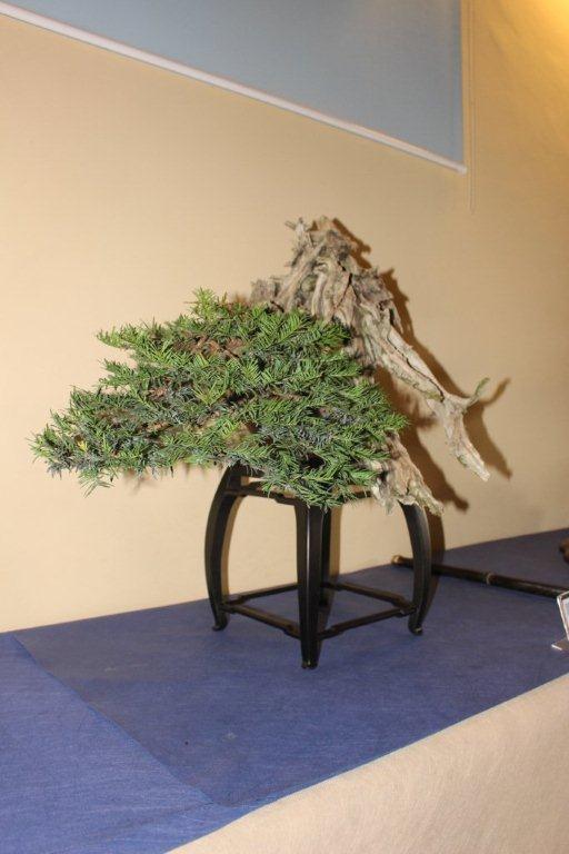 Mostra bonsai e suiseki a Roma. Img_6326