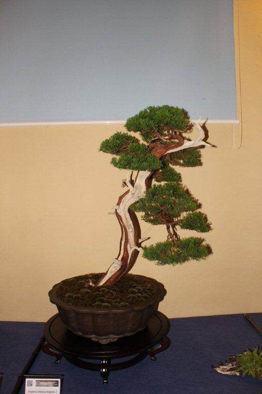 Mostra bonsai e suiseki a Roma. Img_6328