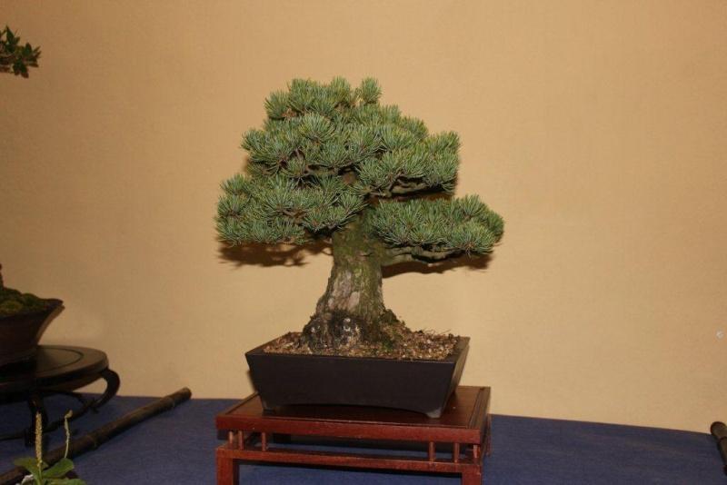 Mostra bonsai e suiseki a Roma. Img_6329