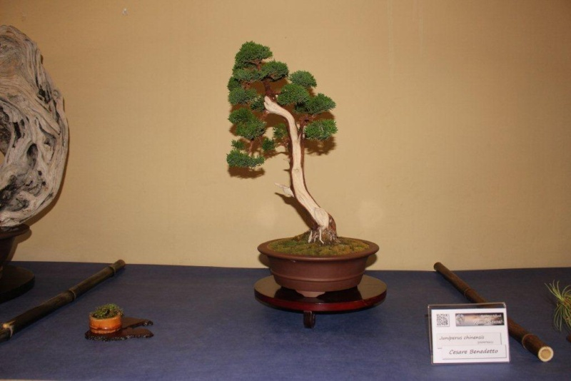 Mostra bonsai e suiseki a Roma. Img_6333