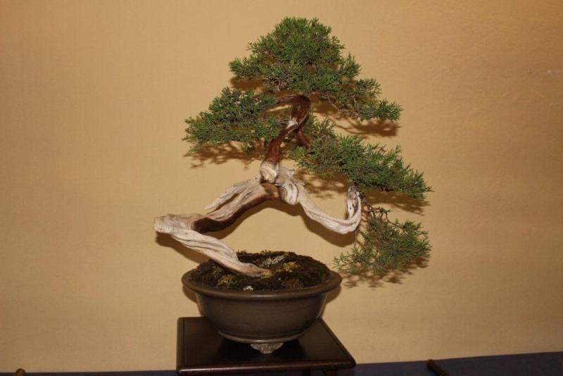 Mostra bonsai e suiseki a Roma. Img_6335