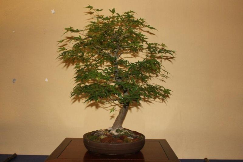 Mostra bonsai e suiseki a Roma. Img_6336