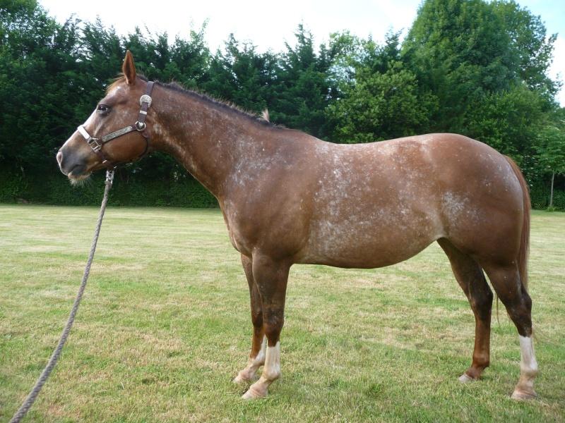 Le cheval toiletté P1150611
