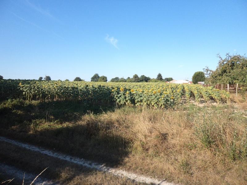 Photos de mon territoire. Dsc01411
