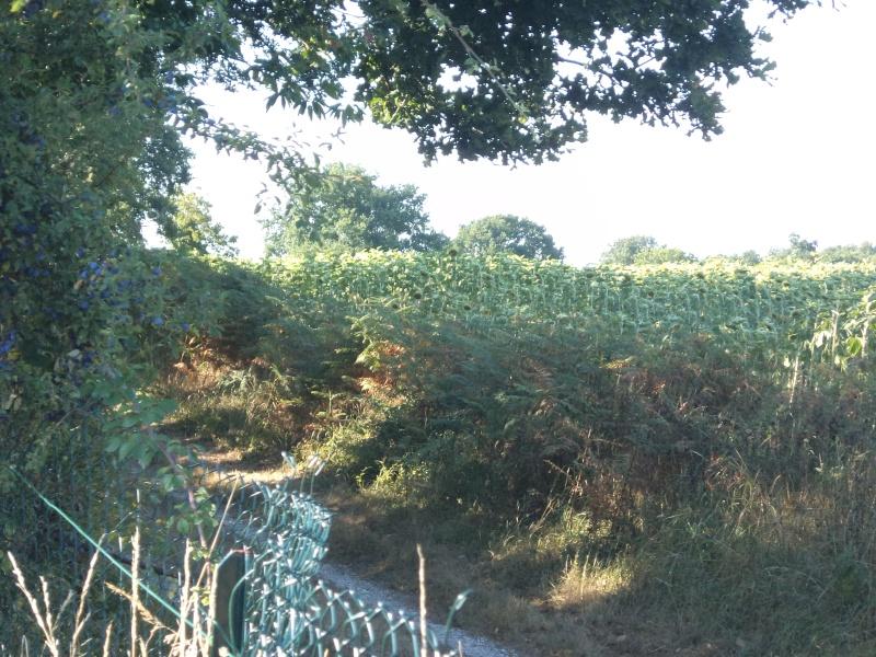 Photos de mon territoire. Dsc01412
