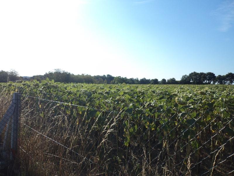 Photos de mon territoire. Dsc01415