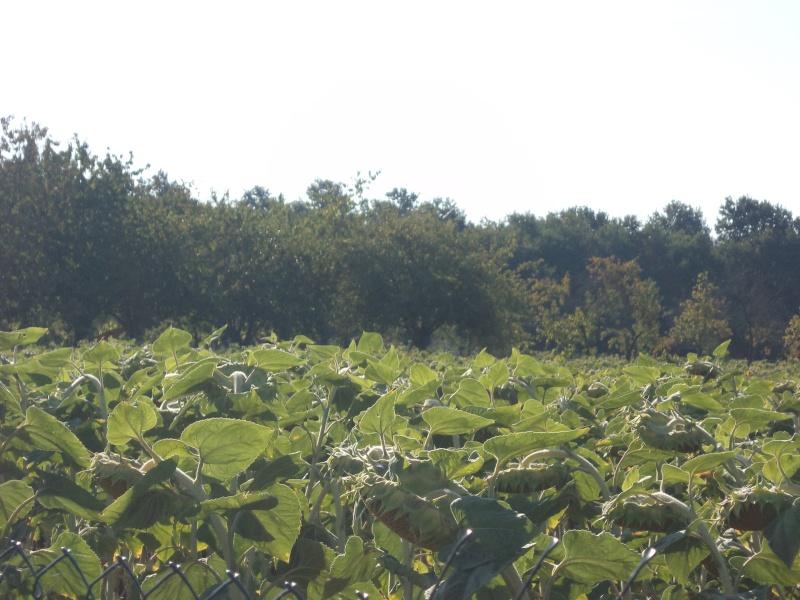 Photos de mon territoire. Dsc01416