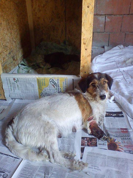 HOPE 4, F-X Fox, handicapée, née 2011 (Etela) - Prise en charge Association Enfin le Bonheur 11013310