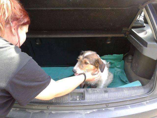 HOPE 4, F-X Fox, handicapée, née 2011 (Etela) - Prise en charge Association Enfin le Bonheur 11760210
