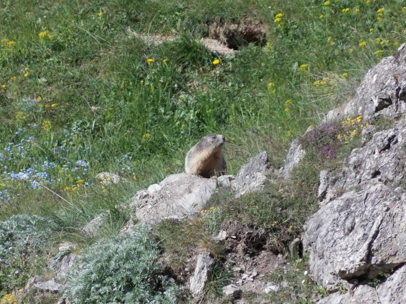 Alpes 2015 Dscn5510