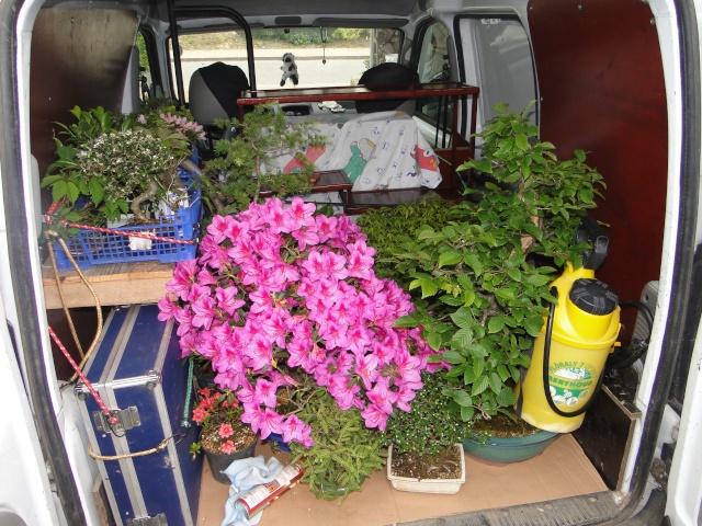 le club émeraude bonsaï  expose le 6 et 7 juin a a la sale des fêtes de lanvallay  Dsc07711