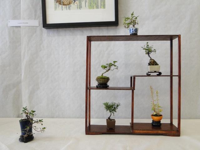 le club émeraude bonsaï  expose le 6 et 7 juin Dsc07815
