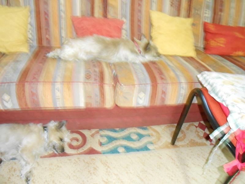 Les cairns racontent leur vie à leur copains -Août  2015 - Page 4 Dscn2210