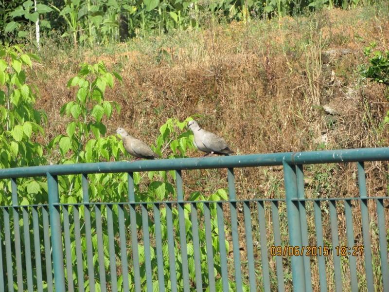 Oiseaux vus au Portugal F0346310