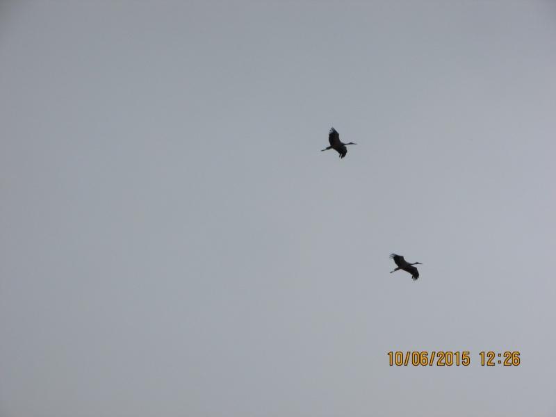 Oiseaux vus au Portugal F0431710