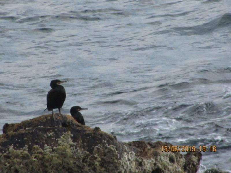 Oiseaux vus au Portugal F3227710